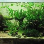Contrôleur d'aquarium : circuit de base