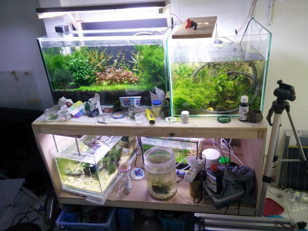 Stand temporaire à aquariums. le meuble est sur roulettes et donc déplaçable dans la fishroom.