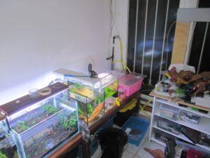 l'experience sur la seiyru stone, dans le coin de la fishroom