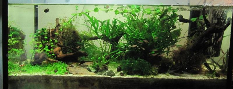 Aquascape dans un aquarium de 50l